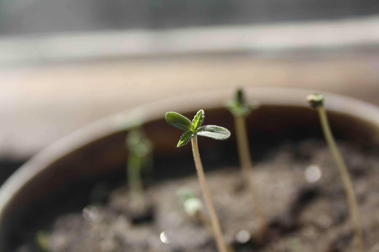 Seedling 1062906 1280